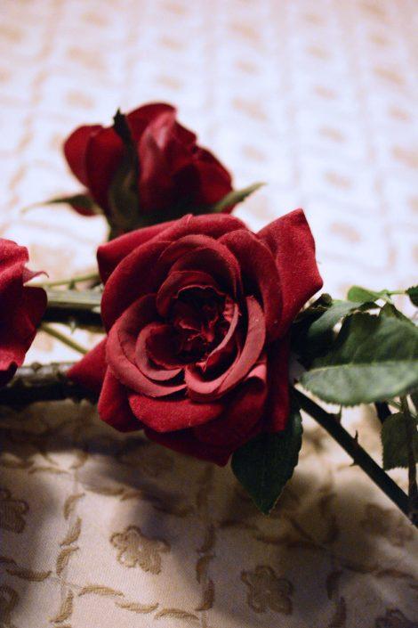 rosa rossa in hotel a venezia