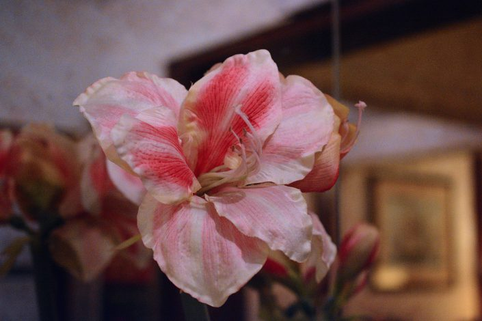 fiori in hotel venezia