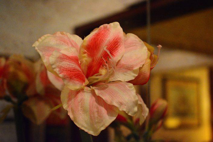 fiore colorato in hotel 2 stelle